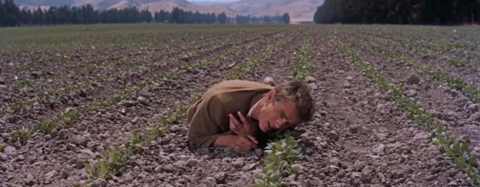 La scena in cui Cal contempla la crescita dei suoi fagioli